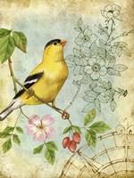 Songbird Sketchbook III Fine-Art Print