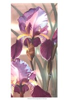 Asian Iris I Fine-Art Print