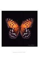 Techno Butterfly IV Fine-Art Print