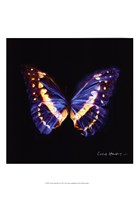 Techno Butterfly II Fine-Art Print