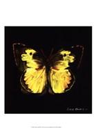 Techno Butterfly I Fine-Art Print