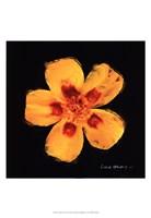 Vibrant Flower X Fine-Art Print