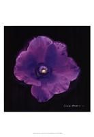 Vibrant Flower VIII Fine-Art Print