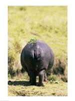 Hippopotamus for Behind Fine-Art Print