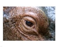 Hippopotamus Eye Fine-Art Print