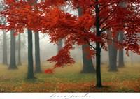 Autumn Mist II Fine-Art Print