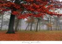 Autumn Mist I Fine-Art Print