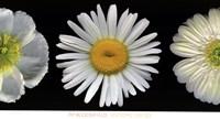 White Diptych Fine-Art Print