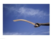 Throwing Non- Return, Fighting Boomerang, Australia Fine-Art Print