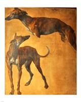 Study of Greyhounds Fine-Art Print