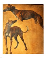 Study of Greyhounds Fine-Art Print
