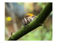 Small Spider Fine-Art Print