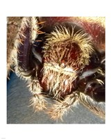 Spider Close Up Fine-Art Print