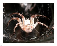 Spider In Web Fine-Art Print