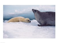 Harp Seals Adult And Baby Fine-Art Print