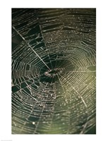 Close-up of a spider's web Fine-Art Print