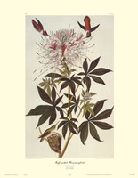 Ruff-Necked Hummingbird Fine-Art Print