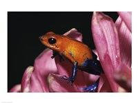 Strawberry Poison Frog - pink flower Fine-Art Print