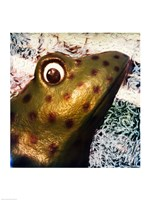 Profile of playground frog Fine-Art Print