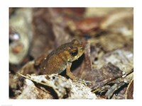 Close-up of a toad on the ground Fine-Art Print