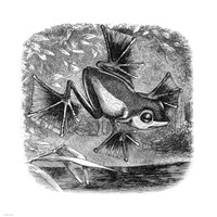 Wallace Frog Fine-Art Print