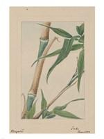 Bamboo Tree Detail Fine-Art Print