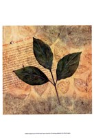 Antiqued Leaves I Fine-Art Print