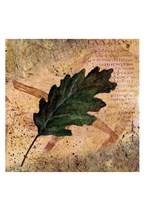 Antiqued Leaves II Fine-Art Print