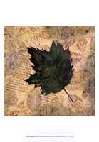 Antiqued Leaves III Fine-Art Print