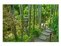Hasedera-Bamboo Grove Fine-Art Print
