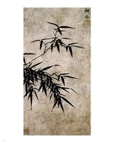 Xia Chang- Ink Bamboo Fine-Art Print