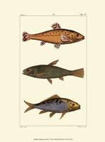 Freshwater Fish IV Fine-Art Print