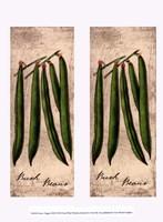 Fresco Veggies XIII Fine-Art Print