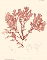 Nature Print in Coral IV Fine-Art Print