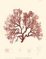 Nature Print in Coral II Fine-Art Print