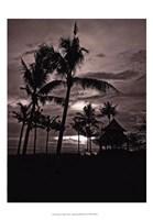 Palms At Night I Fine-Art Print