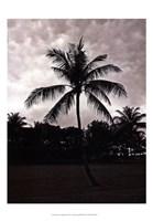 Palms At Night II Fine-Art Print