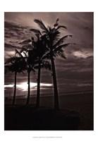 Palms At Night III Fine-Art Print