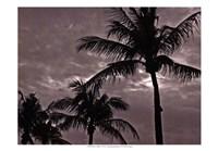 Palms At Night IV Fine-Art Print