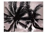 Palms At Night V Fine-Art Print