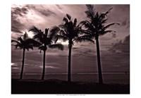 Palms At Night VI Fine-Art Print