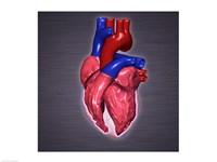 Close-up of a human heart Fine-Art Print