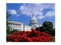 Flowering plants in front of the Capitol Building, Washington, D.C., USA Fine-Art Print