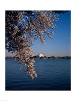 Jefferson Memorial Washington, D.C. USA Fine-Art Print