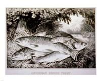 American Brook Trout Fine-Art Print