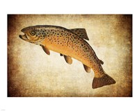 Brown Trout II Fine-Art Print