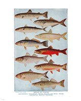 Group of Fishes Fine-Art Print