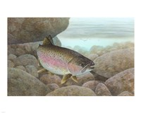 Rainbow trout - swimming Fine-Art Print