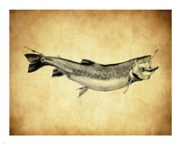 Trout - black and white Fine-Art Print