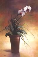 Flowering Orchid I Fine-Art Print